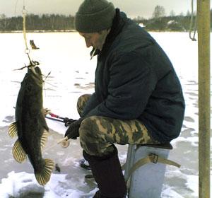 Ротан (головёшка, головёшка-ротан) - рыба семейства Головёшковые...